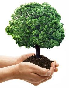 copacul care creste